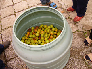 Don't Forget Windfall Apples For Rakia