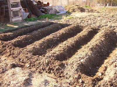 Yambol City Farming Begins