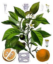 Neroli Oil - A Popular Perfume Ingredient