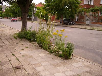 A Yambol DIY Garden