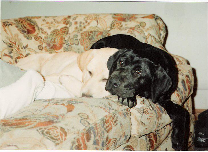 [Maxine,Ursa+on+couch,6+mos,jpeg]