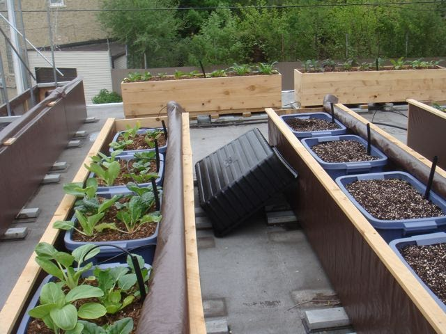 Green Roof Growers Round 2 Coir Vs Peat In A Sub