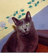 Babooshka, my first Russian Blue