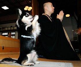 Praying dog joins temple