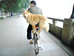 Dog strikes right balance