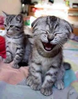 gatinhos sorringo, mijei de rir