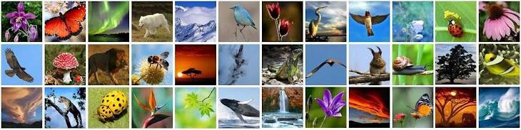 Doğanın Ruhu
