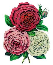 gracias princesa krodin