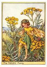 hadas de amarillo