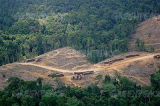 Deforestando la selva para hacer vasitos de papel
