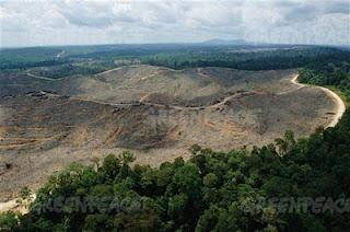 Deforestación en Indonesia para Alcampo