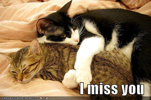 Bevalabeada I;ll miss you. Miss you-No tail cat Greeting Cards by BrensLens