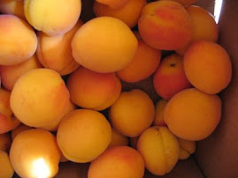 Heritage Apricots
