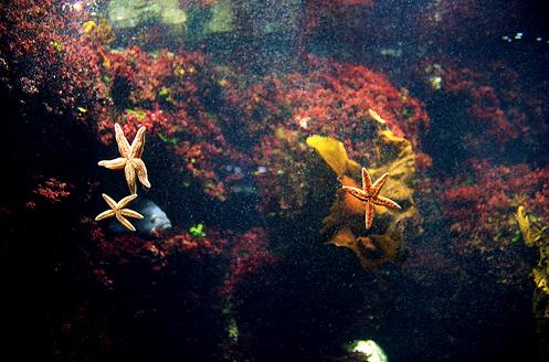 [star+fish]