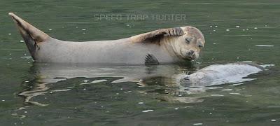 [Image: seals-russian-river-jenner-ca-2.jpg]