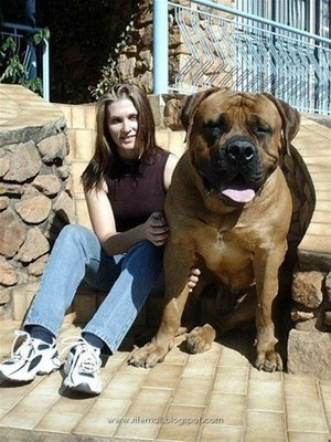 largest dog in world. Crating a large dog will