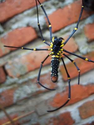 laba-labakus+kerenbangetis+3.jpg (300×400)