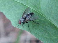NBC AP Biology 10-11: Biology Collection 1: Hunter Pates