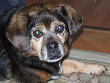 Zeke, a 15 Year Old Diabetic Dog