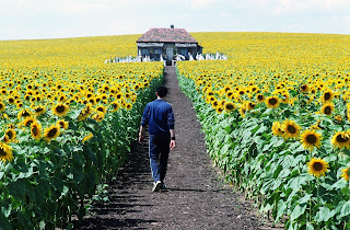 Everything Is Illuminated Criticism | RM.