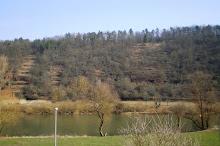 Main-Blick im Frühjahr
