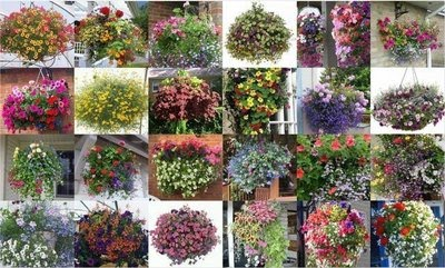 Todo jardines mayo 2010 - Plantas colgantes ...