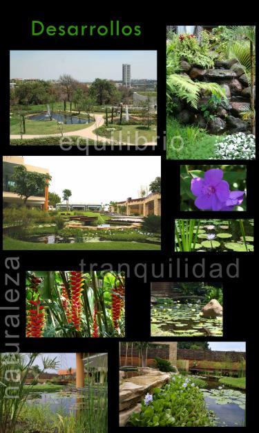 Todo jardines dise os para jardines acu ticos for Jardines acuaticos