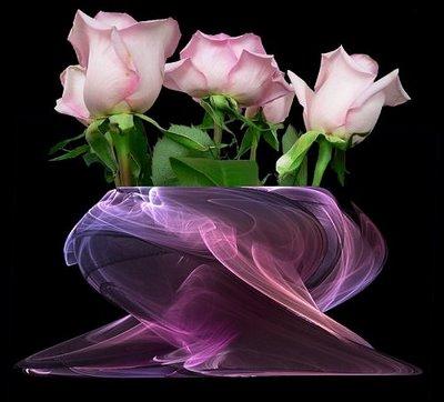 [multiflorafernandopolis,+rosas+1.jpg]
