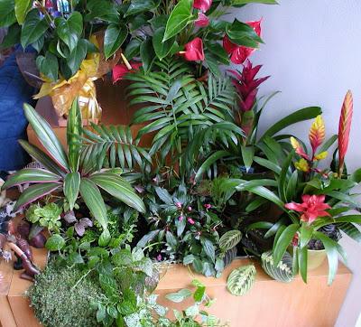 Saiba Tudo Sobre Jardins de Inverno - AprendaCultivar.com.br