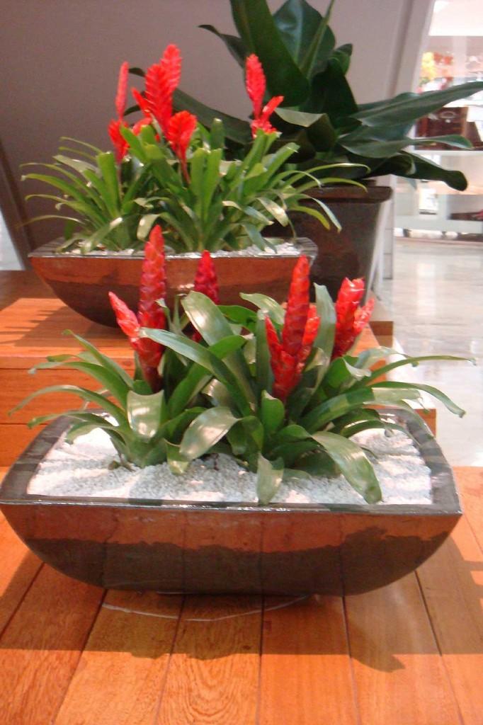 plantas jardins tropicais : plantas jardins tropicais:Floricultura Multiflora Fernandopolis: Tome Nota – Bromélia