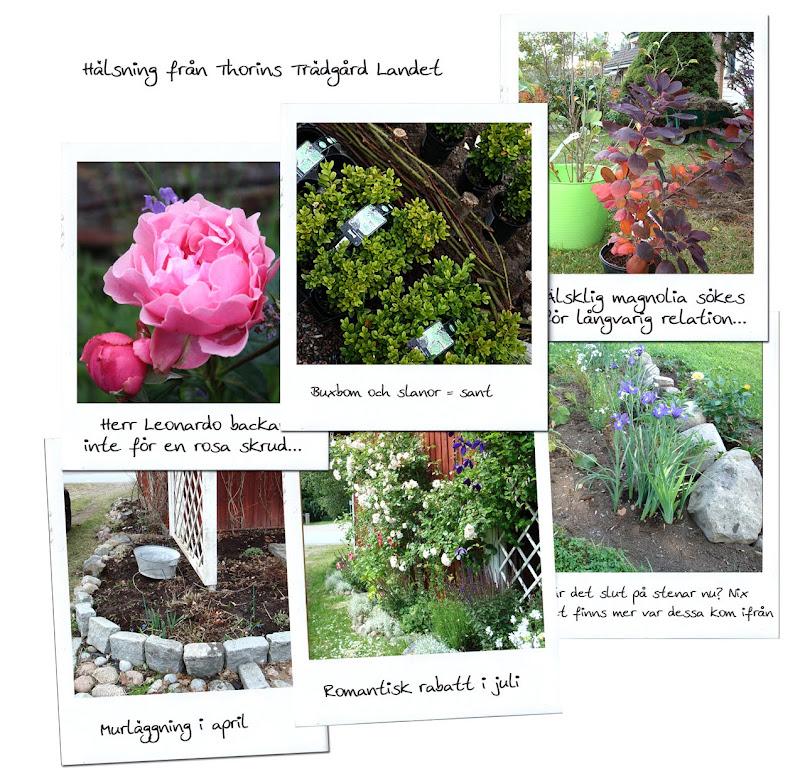 Trädgårdsbloggen Thorins Trädgård