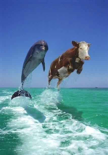 http://4.bp.blogspot.com/_T8v49iat0b0/SwxKkq9fNLI/AAAAAAAAERA/nnD_xRZSOK8/s1600/dolphin.jpg