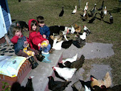 Friendly Fowl