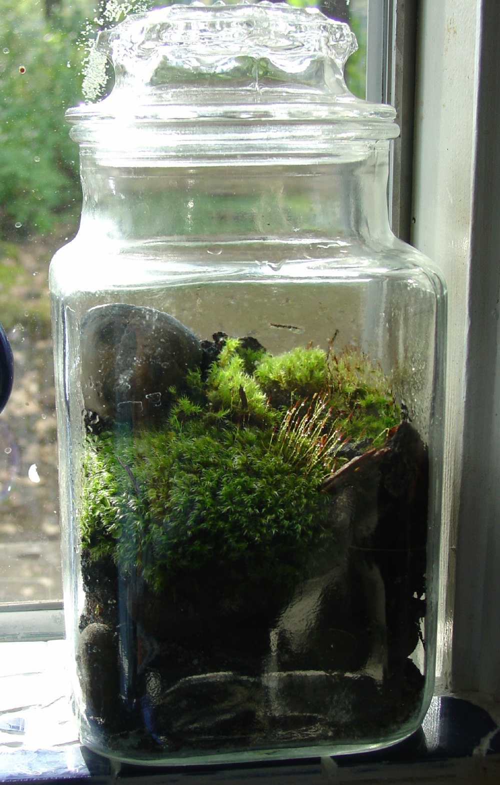 Make The Best of Things: Moss rocks to the rescue