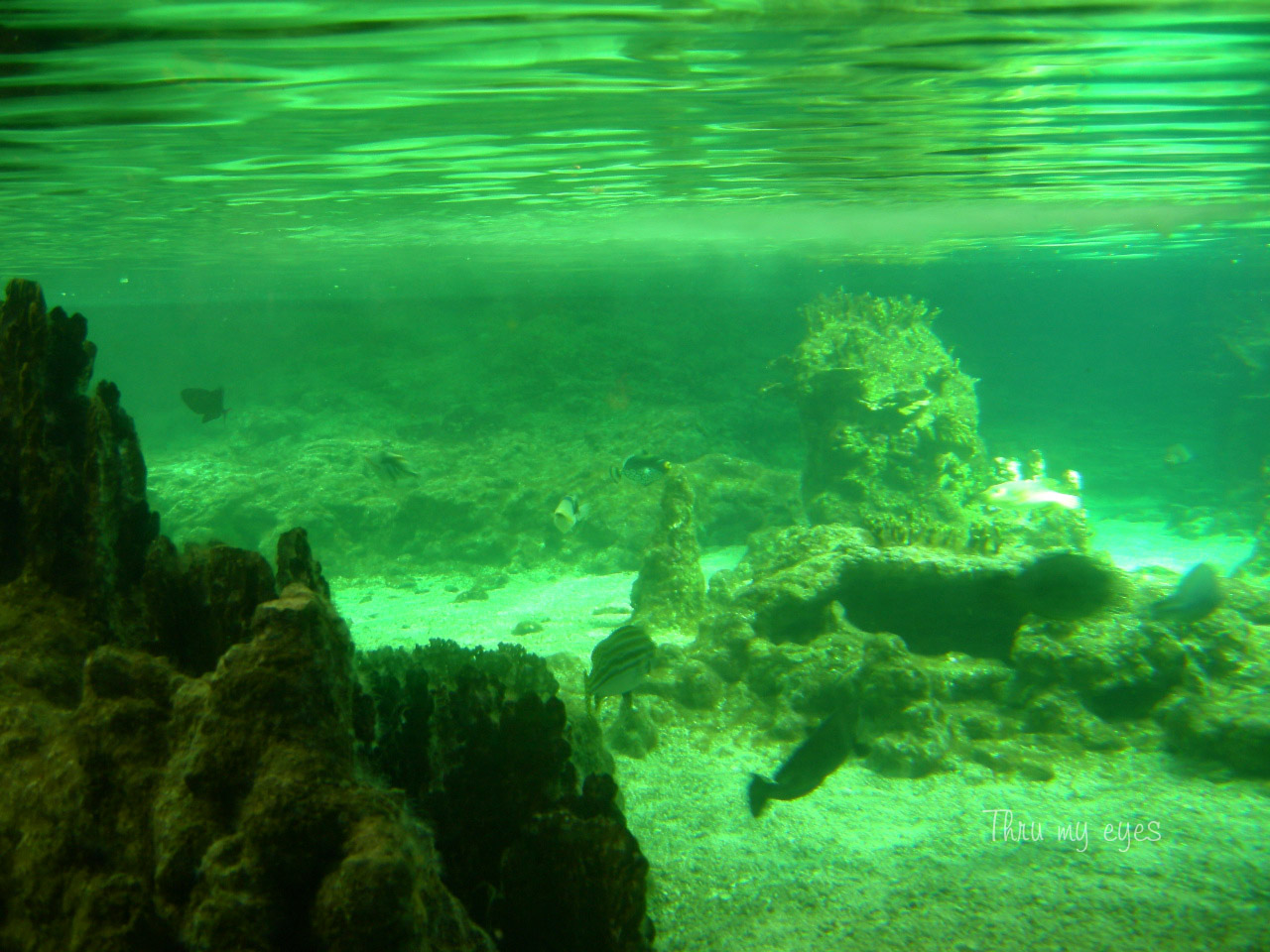 Thru my eyes genova l 39 acquario for Acquario pesci tropicali