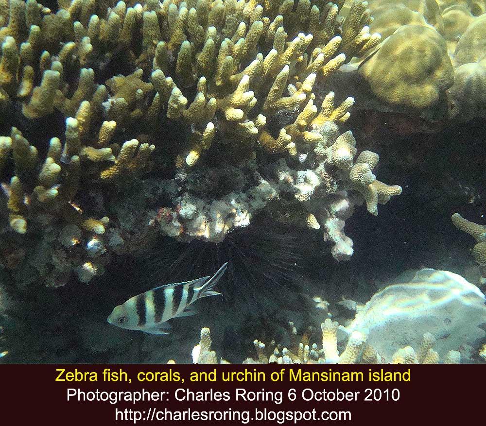 Raja Ampat To Arfak Mountains: Underwater Photographs Of