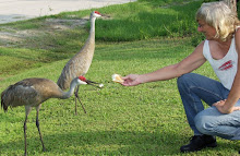 A Pair Of Sand Hill Cranes Getting Part Of My Lunch