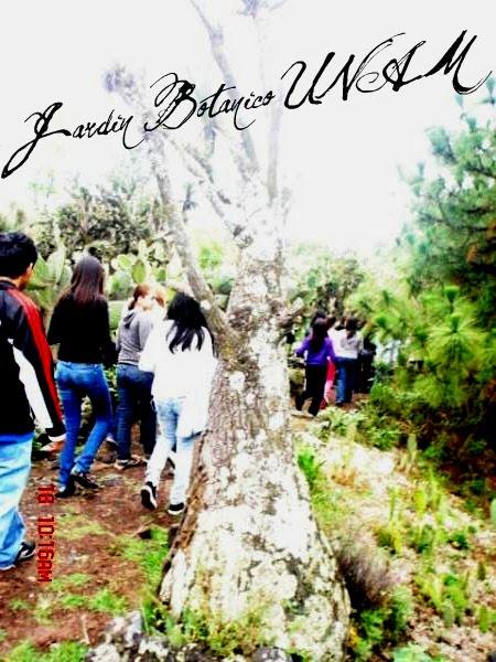 Jardin botanico unam jard n b tanico unam for Jardin botanico unam 2015