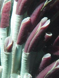 http://4.bp.blogspot.com/_TBo02pPkXnY/R7AulQC0oaI/AAAAAAAAAas/BwDqRHdf7q4/s320/tubeworm.jpg