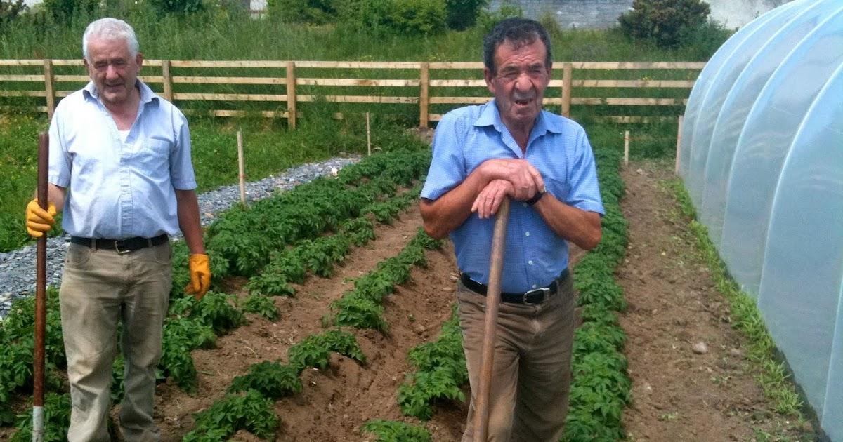 Speedie's Blog: Galway city's Largest Community Garden To ...