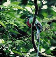 reserva natural biosfera, el triunfo chiapas, méxico, ANP