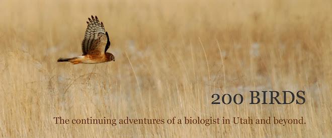 200 Birds