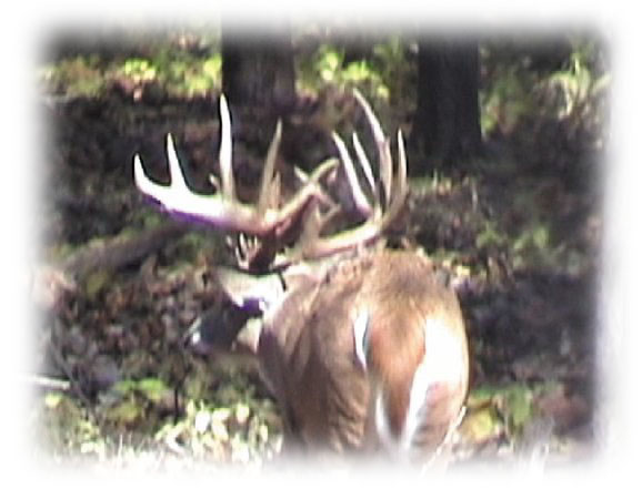 deer hunting buck 2002