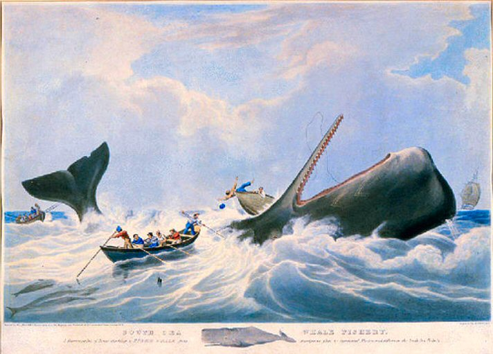 World turn 39 d upside down nantucket whaling the fate of for Nantucket by the sea