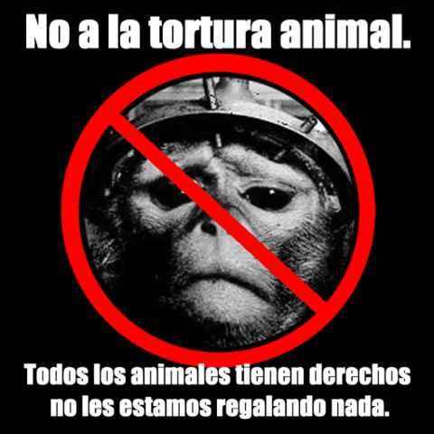 no al maltrato de animales...