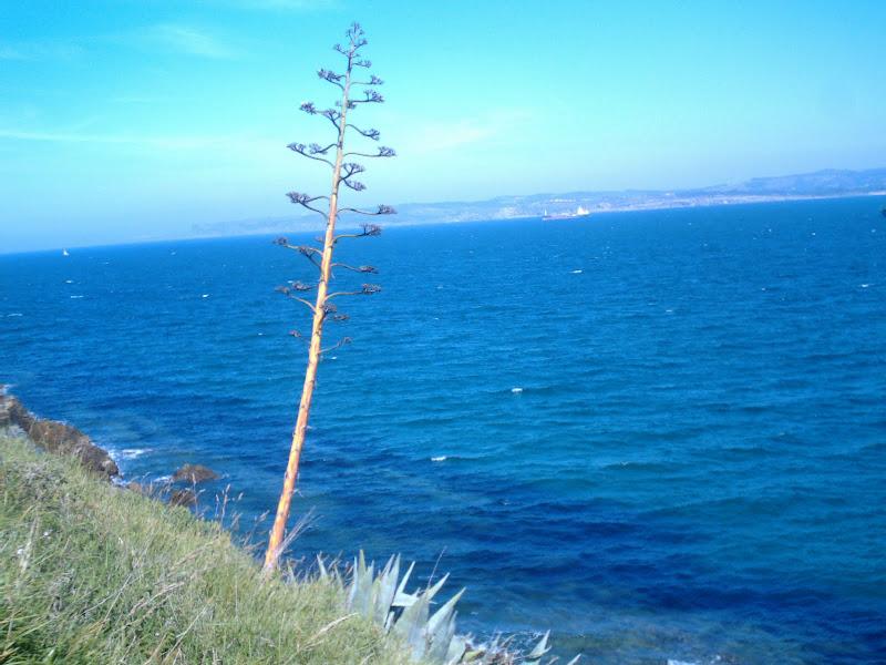arbustos y plantas al borde del acantilado