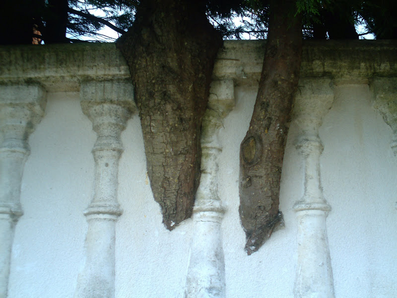 árboles en la pared