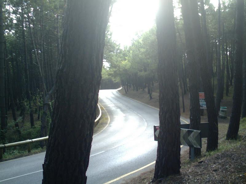 sendero en el pinar de Liencres