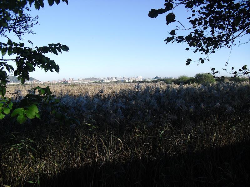 Reserva Municipal Marismas de Alday