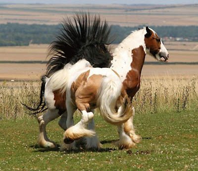 beautiful world horses
